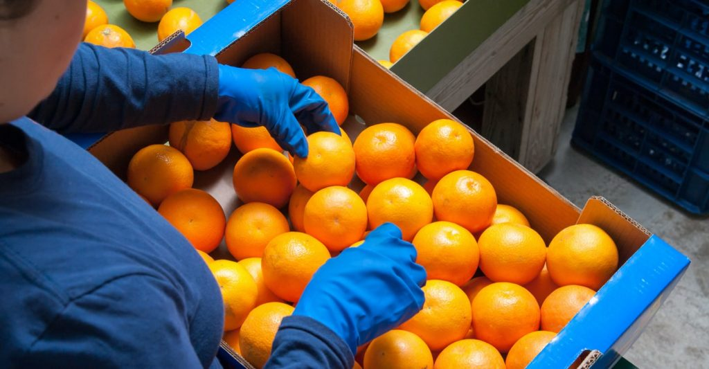 A picture of citrus fruits stocked in a box for delivery.