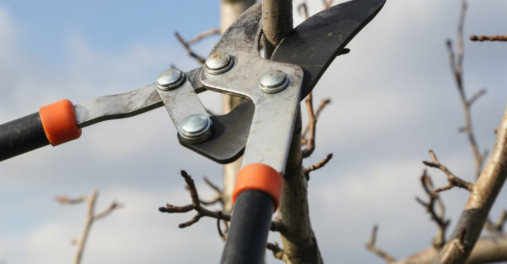 A picture showing the pruning mechanism.