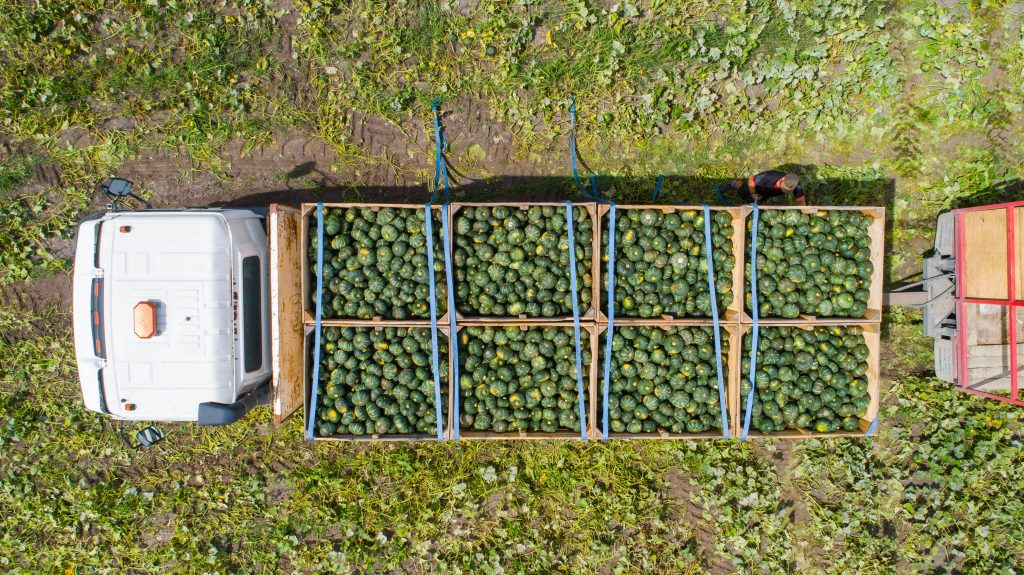 An image of a truck moving a harvest of buttercup squash.