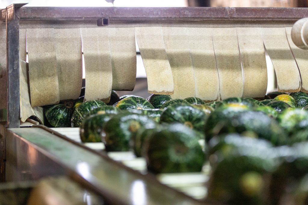An image of buttercup squash going through the assembly line.